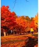美しき日本の紅葉 |